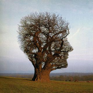 testa albero - servizi psicologia